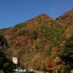 2015年高知県べふ峡渓谷の紅葉状況(11月12日(木)更新)