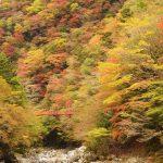 2016年高知県べふ峡渓谷の紅葉状況(11.15更新)