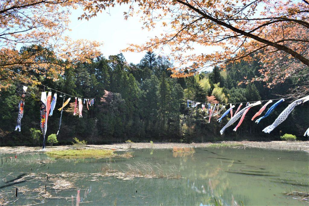 神池の鯉のぼり見に行ってきました!!tags[高知県]