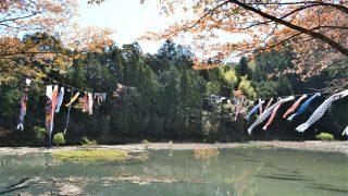 神池の鯉のぼり見に行ってきました!!